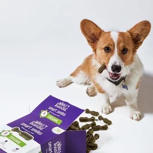 Petco Dog Dental Care Products on Sale