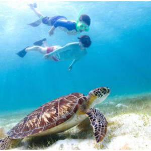 Go Card 夏威夷歐胡島旅行通票 含超40個景點活動 @ Go City