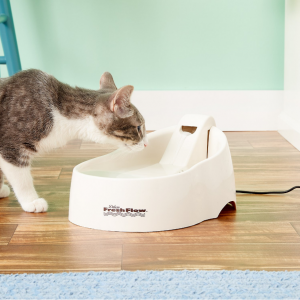 Chewy Cat Water Fountains on Sale
